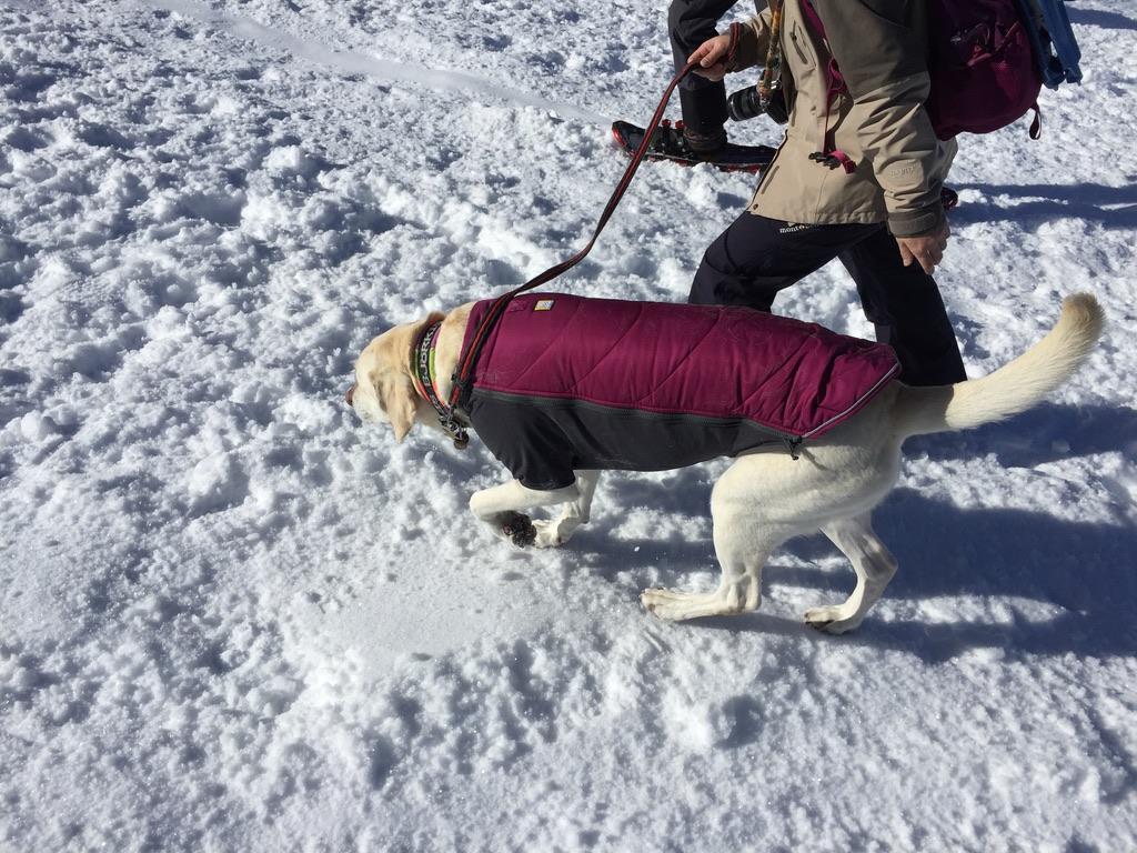 入笠山・入笠山の登山犬2