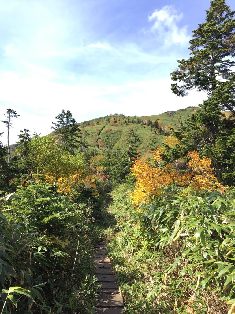 平ヶ岳・池ノ岳へ向かう道