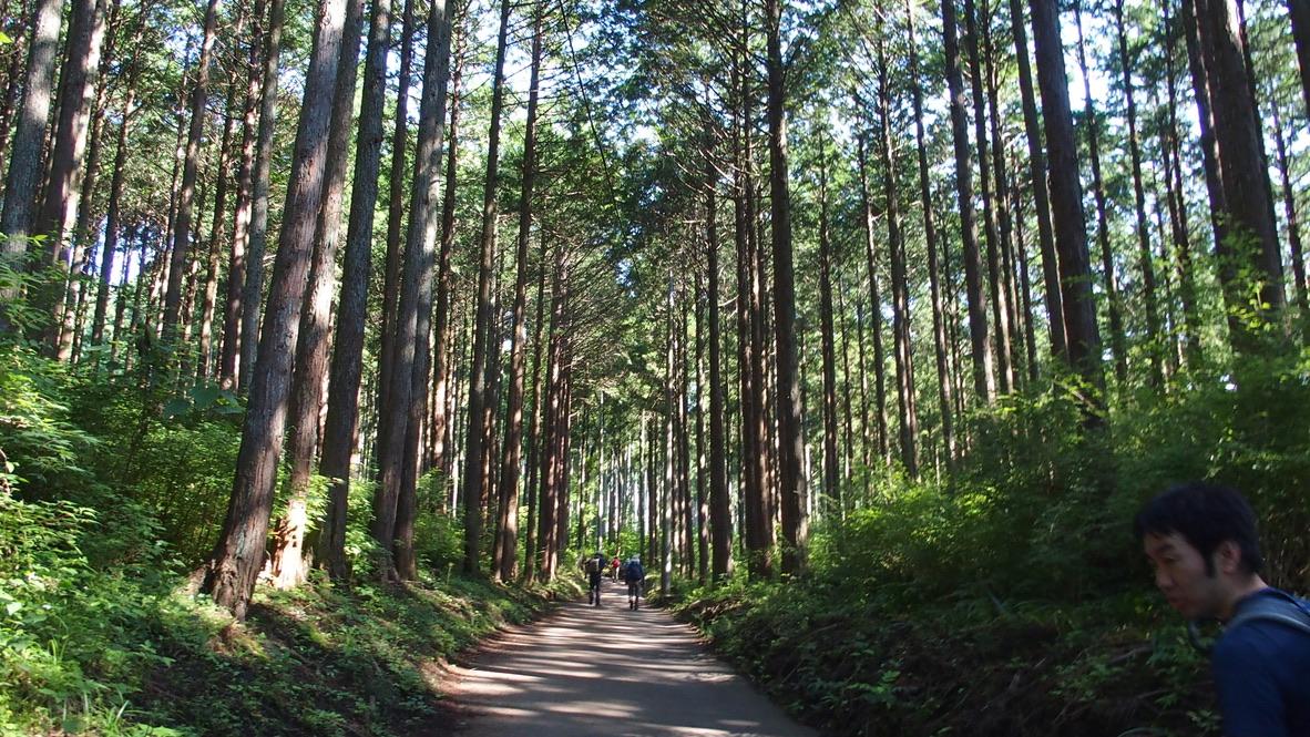 塔ノ岳・はじまりの樹林帯