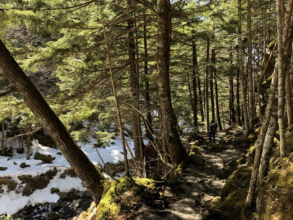 八ヶ岳・南沢・樹林帯をどんどん進みます