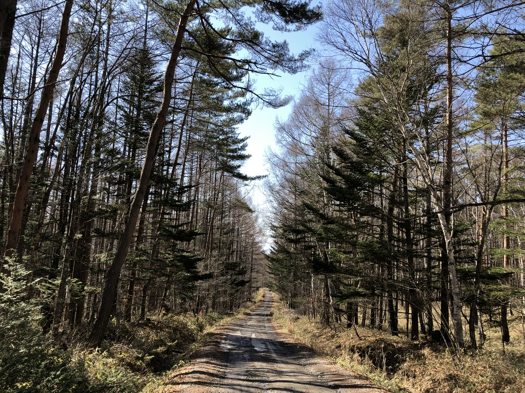 やまのこ村から八ヶ岳山荘まで歩きます
