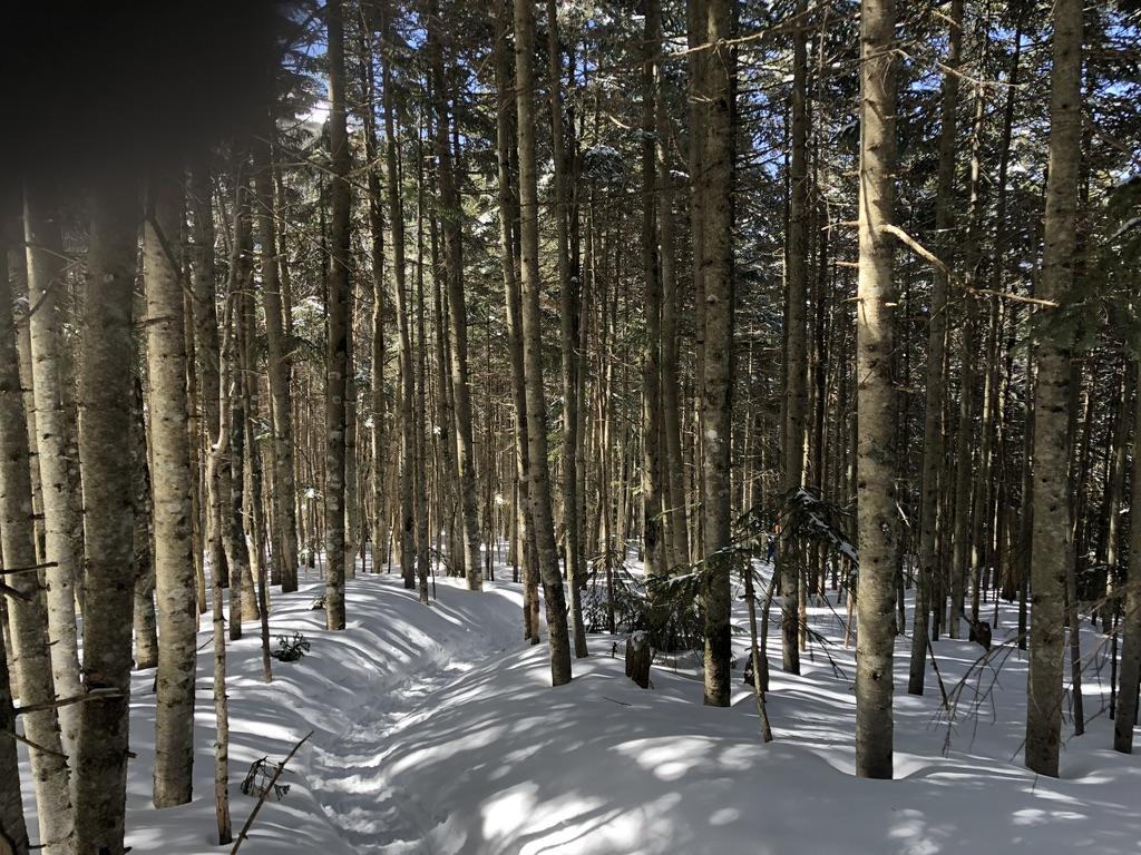 地蔵尾根・樹林帯