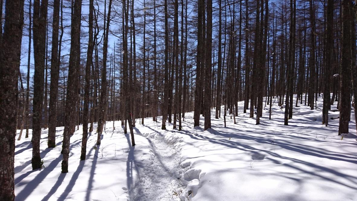 蓼科山・樹林帯