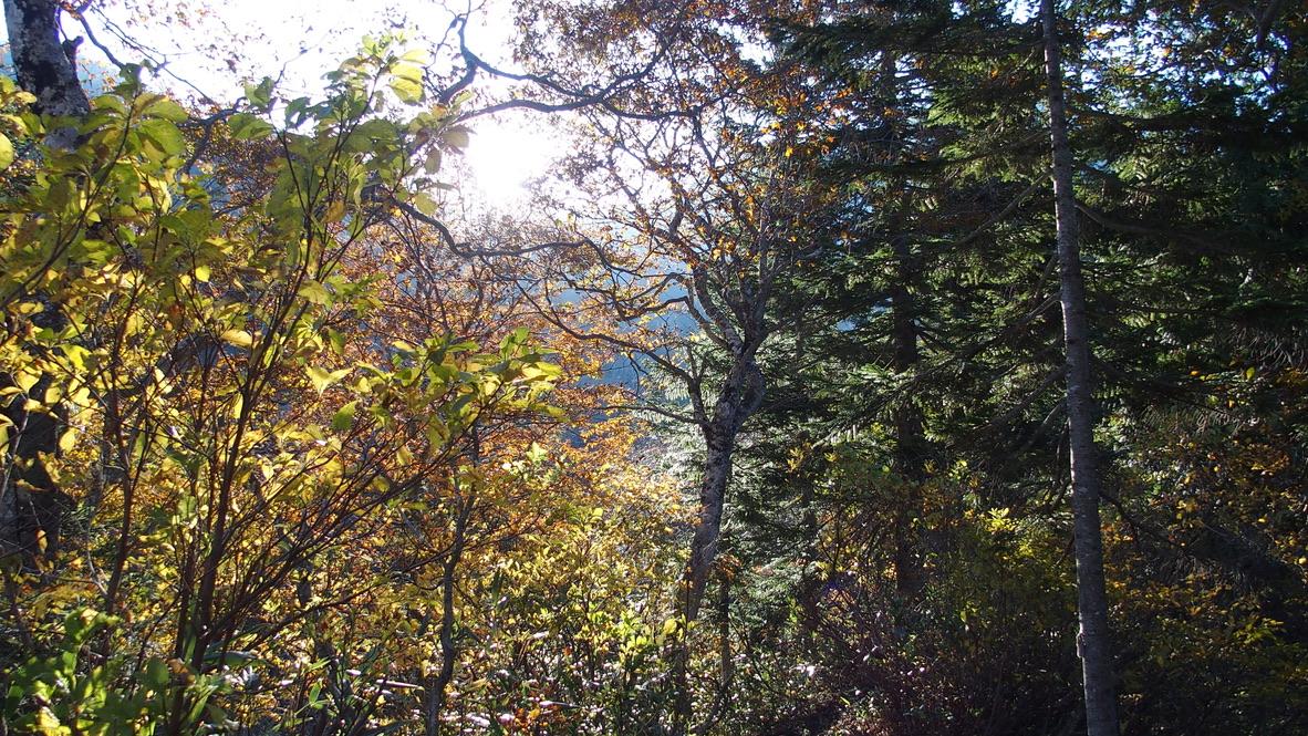 武尊山・樹林帯がひたすら続く・くしゃみが止まらない