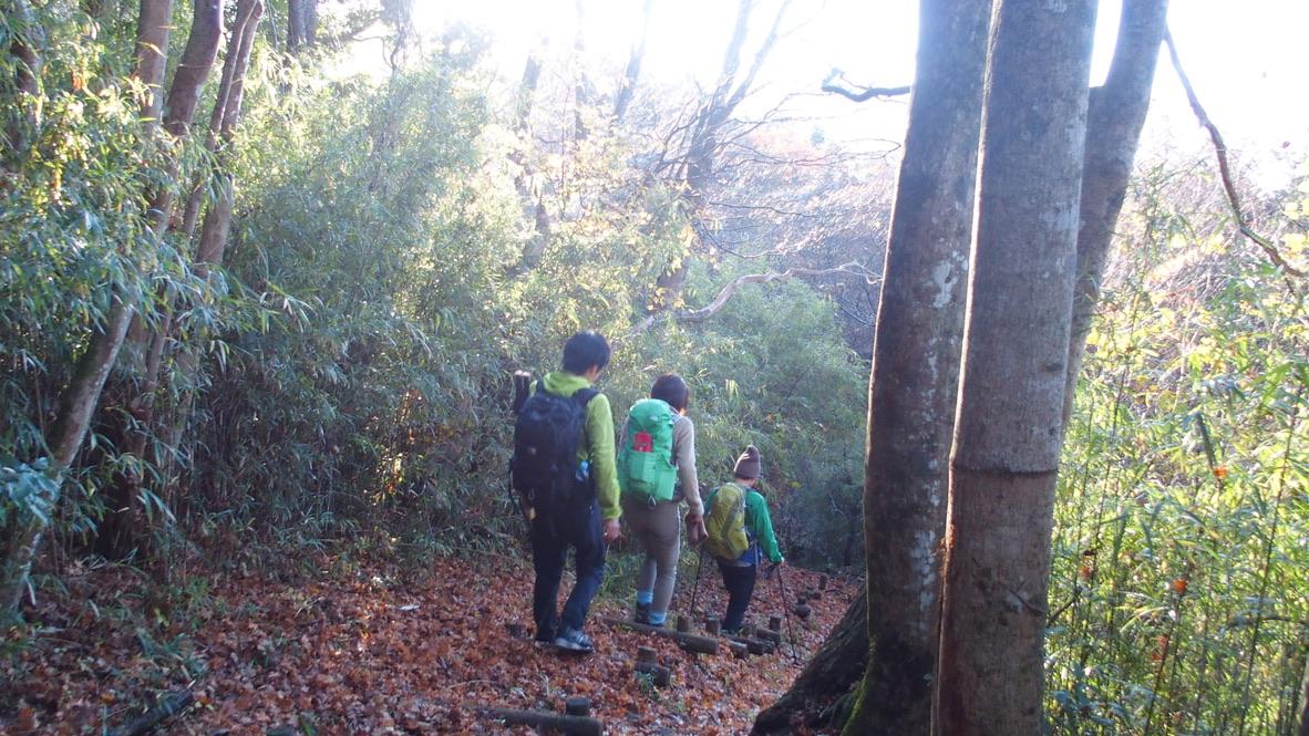 金時山・明神ヶ岳・今日のコーディネートは黄色と緑が多めです