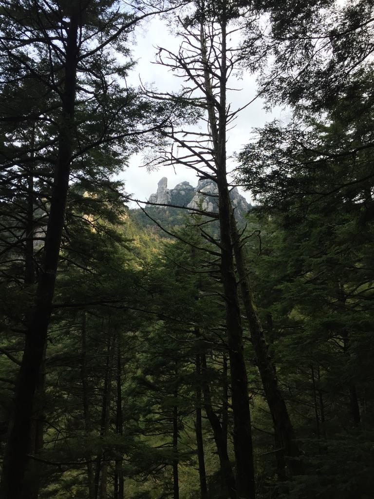 瑞牆山・木々の間から大ヤスリ岩が見えました