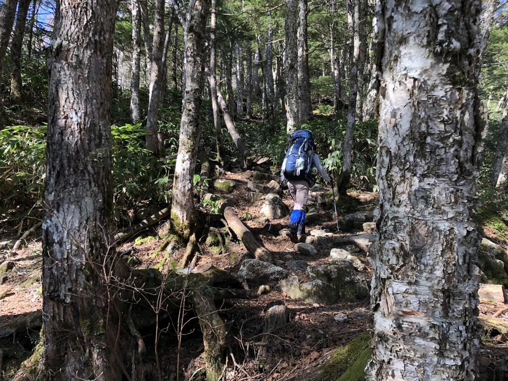 燕岳・第二ベンチに至る道・木の根っこに気を付けましょう