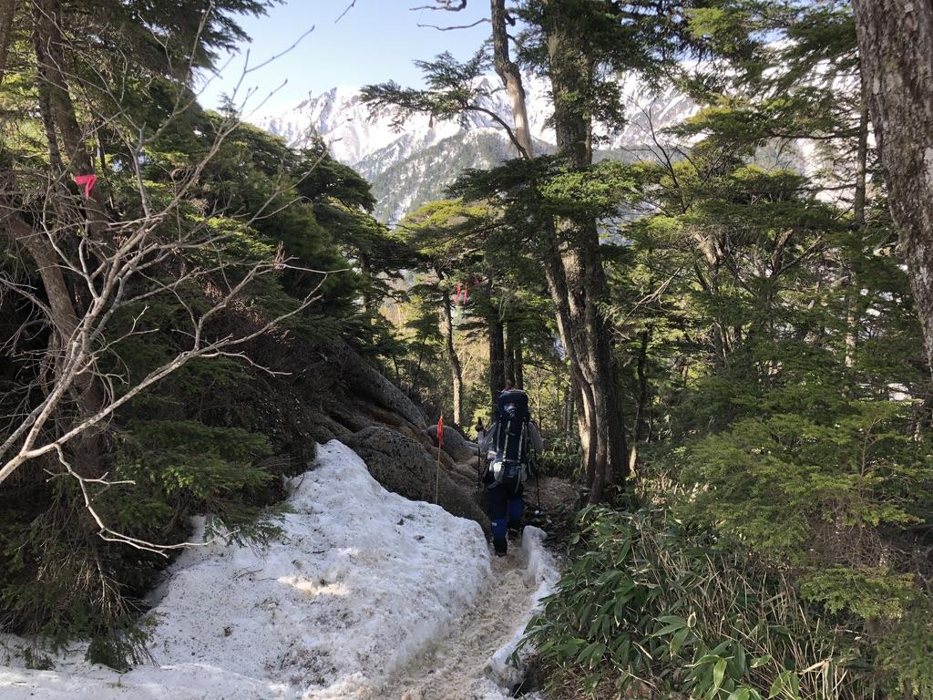燕岳・富士見ベンチへ至る道・緑が深くなってきました