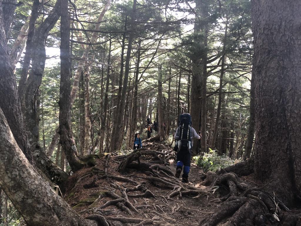 燕岳・第二ベンチに至る道・樹林帯