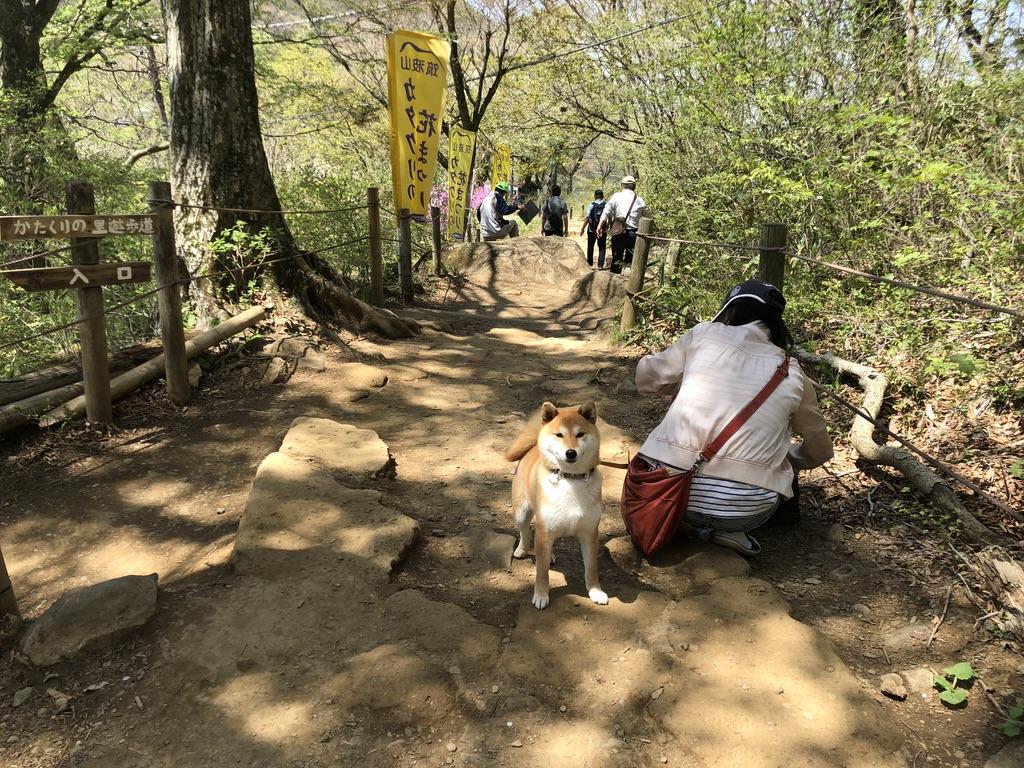 筑波山・山頂連絡路・かたくりの里遊歩道に現れたモンスター