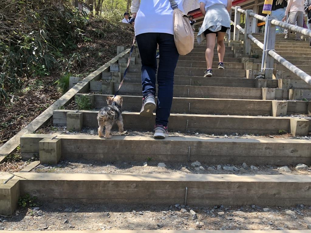 筑波山・男体山・攻める犬