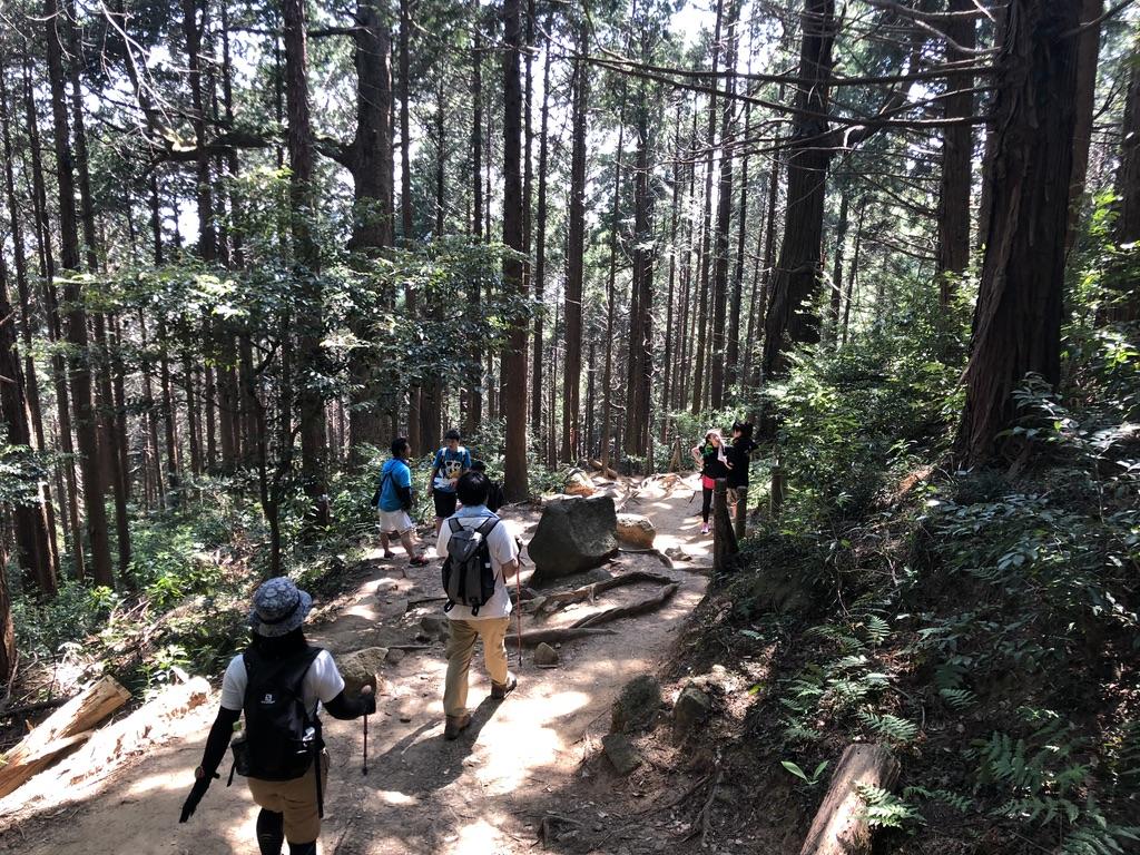 筑波山・御幸ヶ原コース・樹林帯