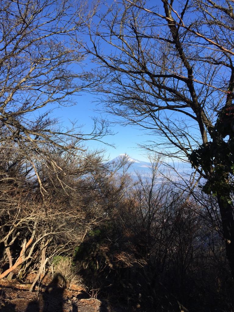 天城山(万二郎岳、万三郎岳)・万三郎岳からの富士山