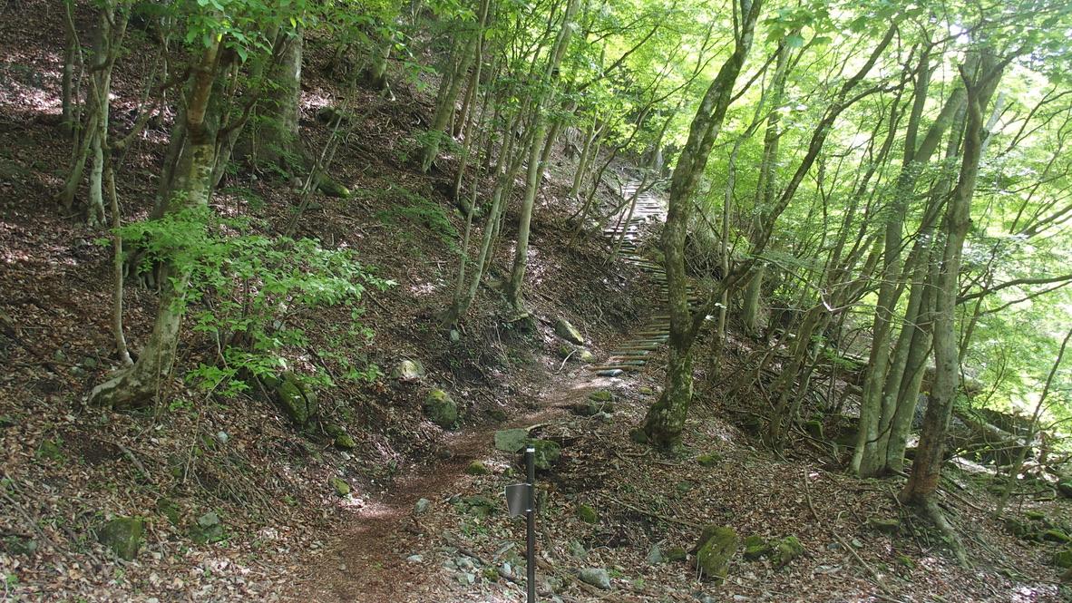 檜洞丸・犬越路への登りがはじまります