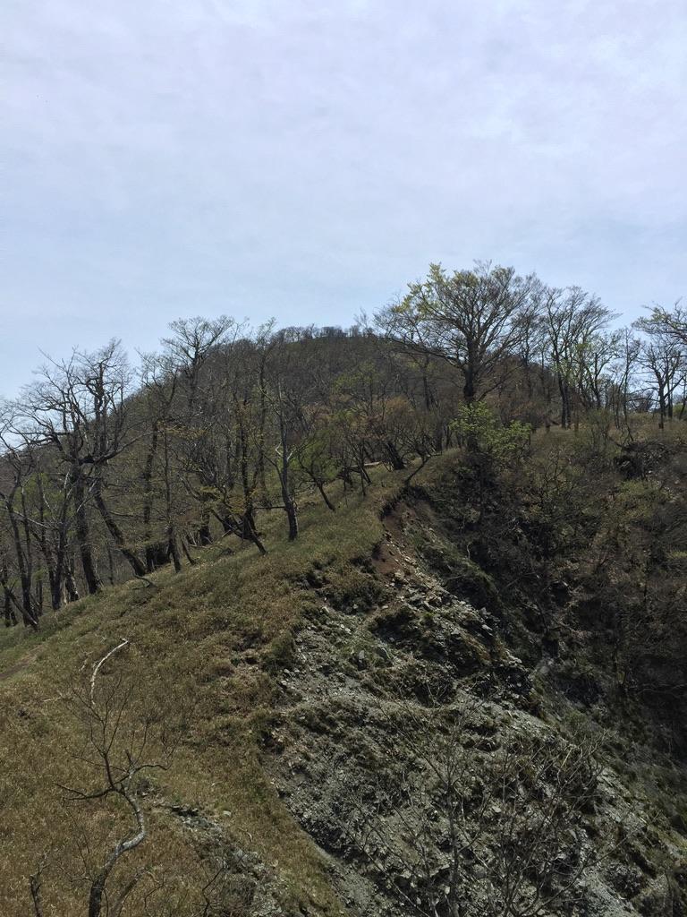 檜洞丸・そろそろ大詰め?熊笹ノ峰から檜洞丸目指します