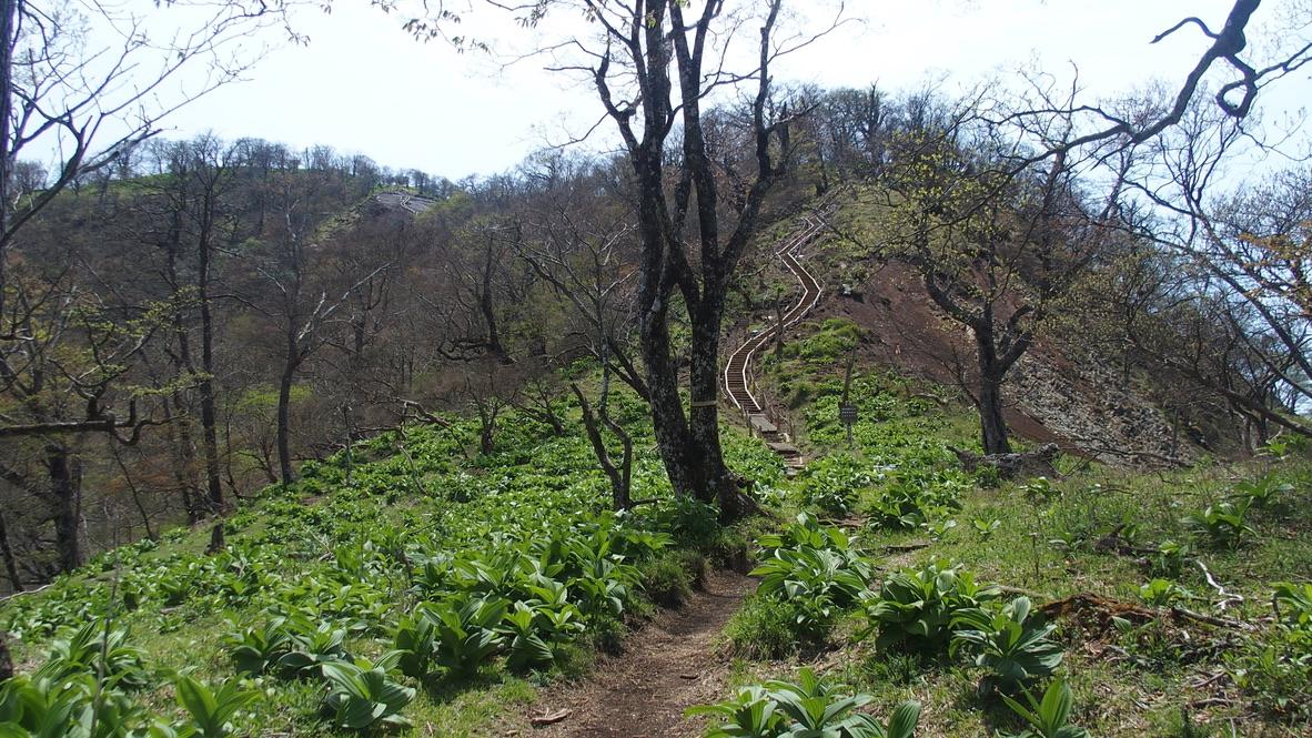 檜洞丸・檜洞丸頂上へと続く木道