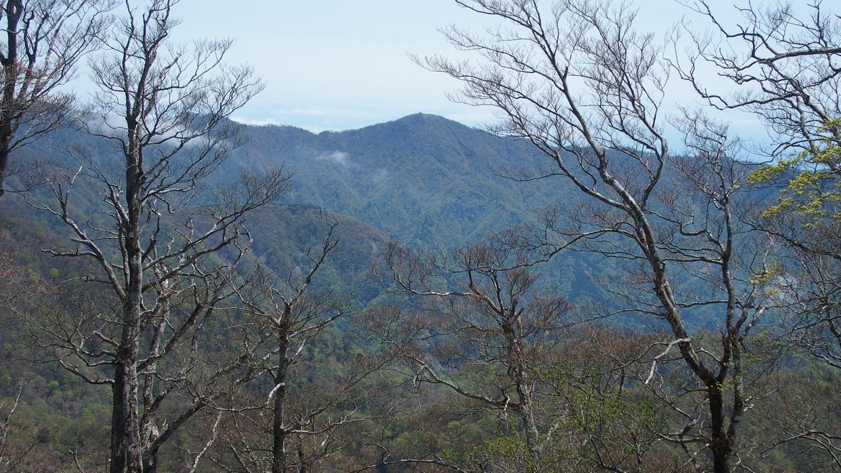 檜洞丸・檜洞丸山頂からの蛭ヶ岳