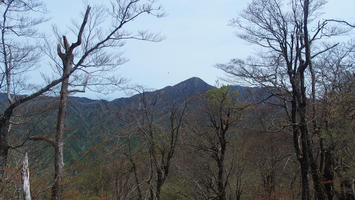 檜洞丸・檜洞丸の木道からの蛭ヶ岳(ひるがたけ)