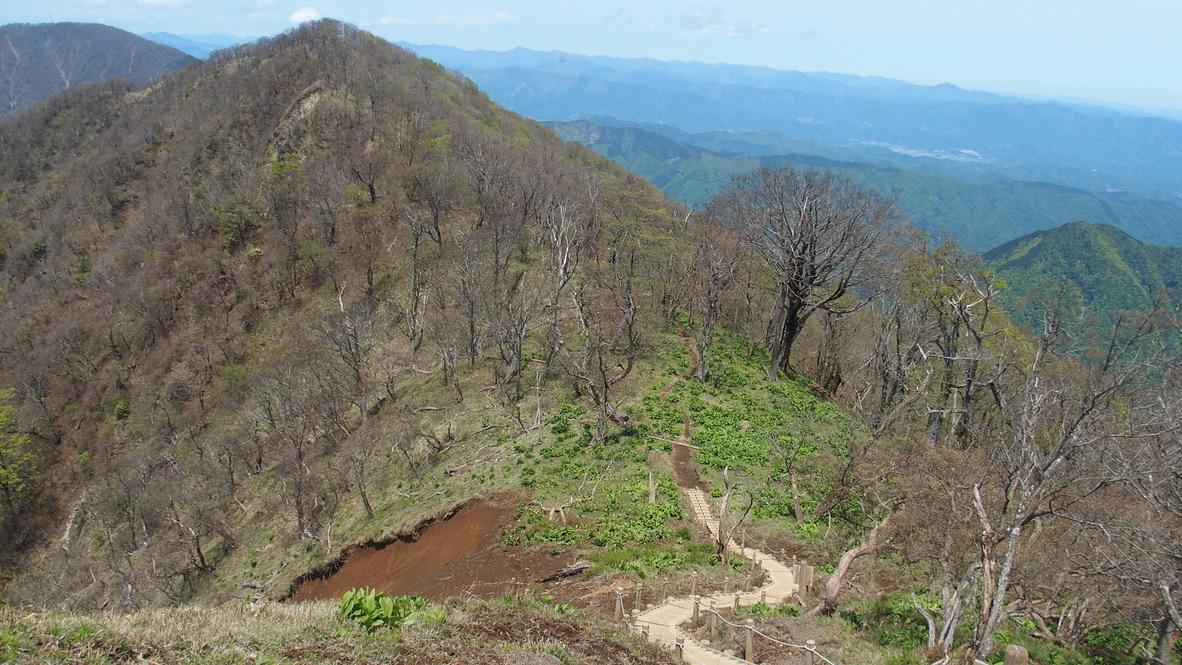 檜洞丸・檜洞丸の木道からの熊笹ノ峰(くまささのみね)