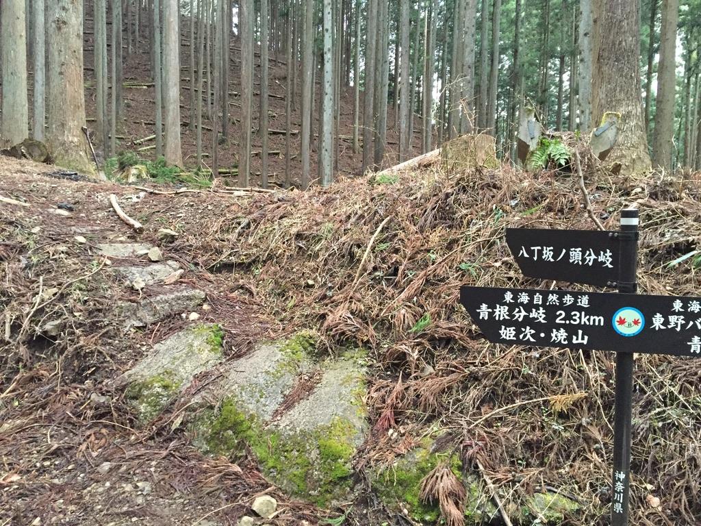 蛭ヶ岳・八丁坂ノ頭分岐と青根分岐の分かれ道