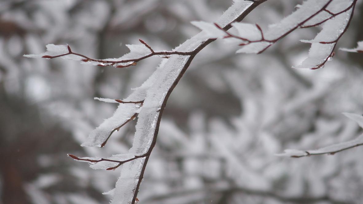 蛭ヶ岳・草木も凍る