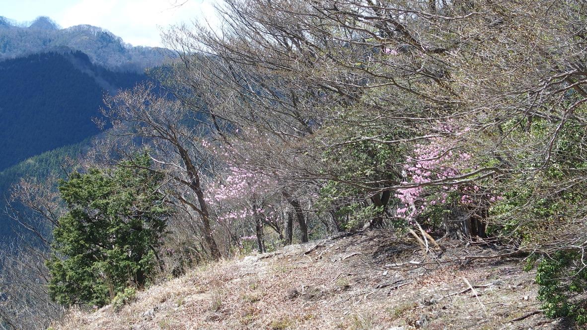 川苔山・雲取山・川苔山から一杯水避難小屋へ、まだまだ先は長い