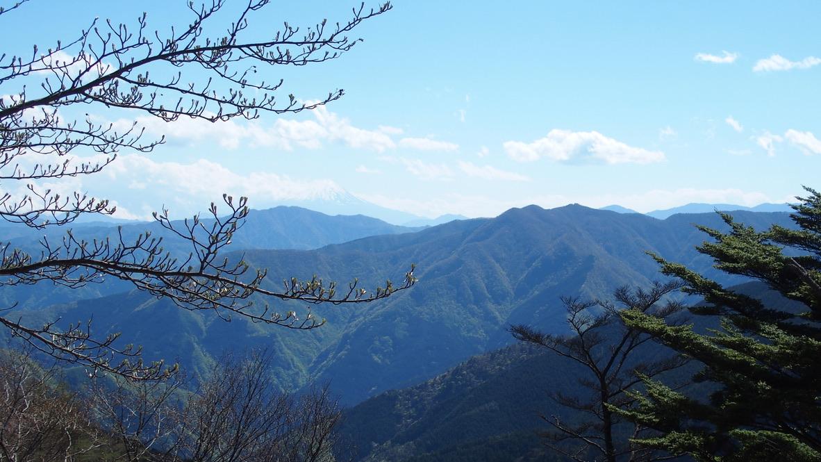 川苔山・雲取山・日向沢ノ峰からの富士山