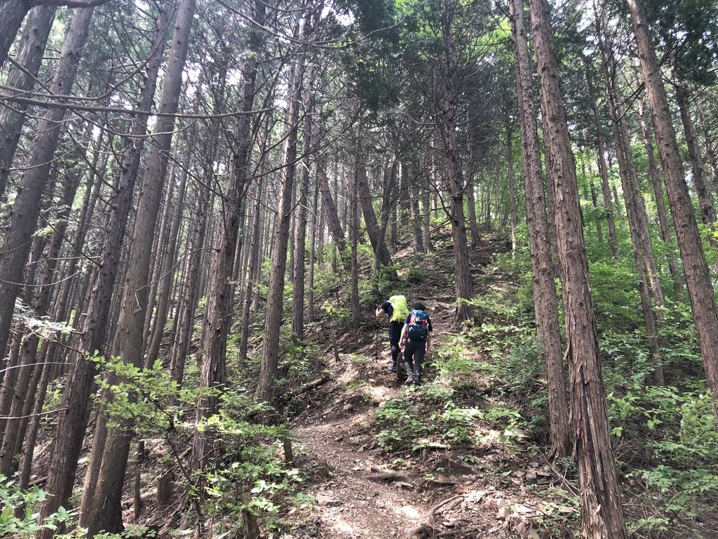 三頭山・ヌカザス尾根でひさびさ登山者