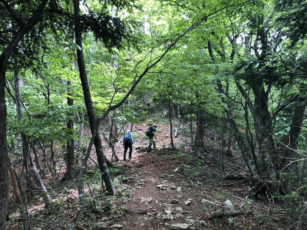 三頭山・鶴峠分岐から三頭山までは登りが続く