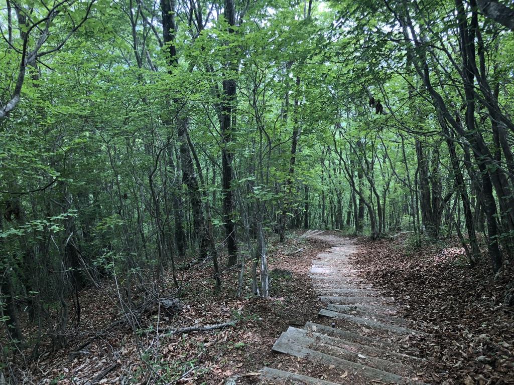 三頭山・ブナの路