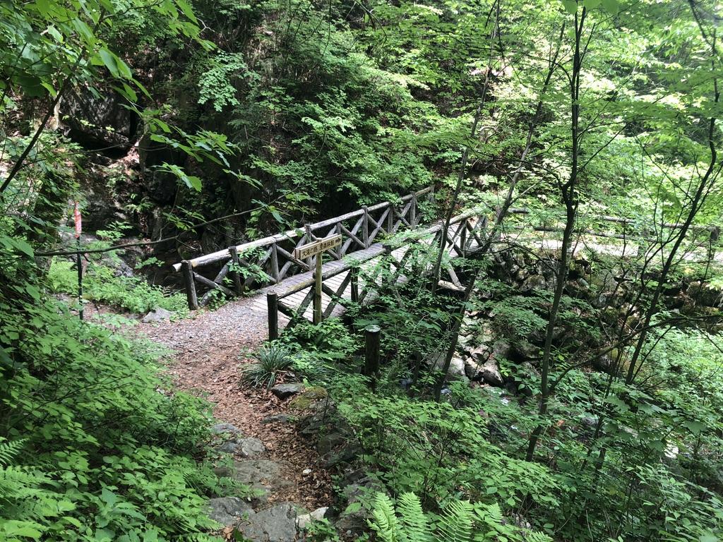 三頭山・三頭大滝、木の橋渡って行きましょう
