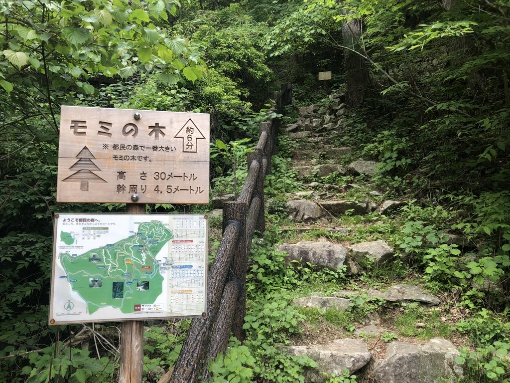 三頭山・都内の森で一番大きいモミの木の看板