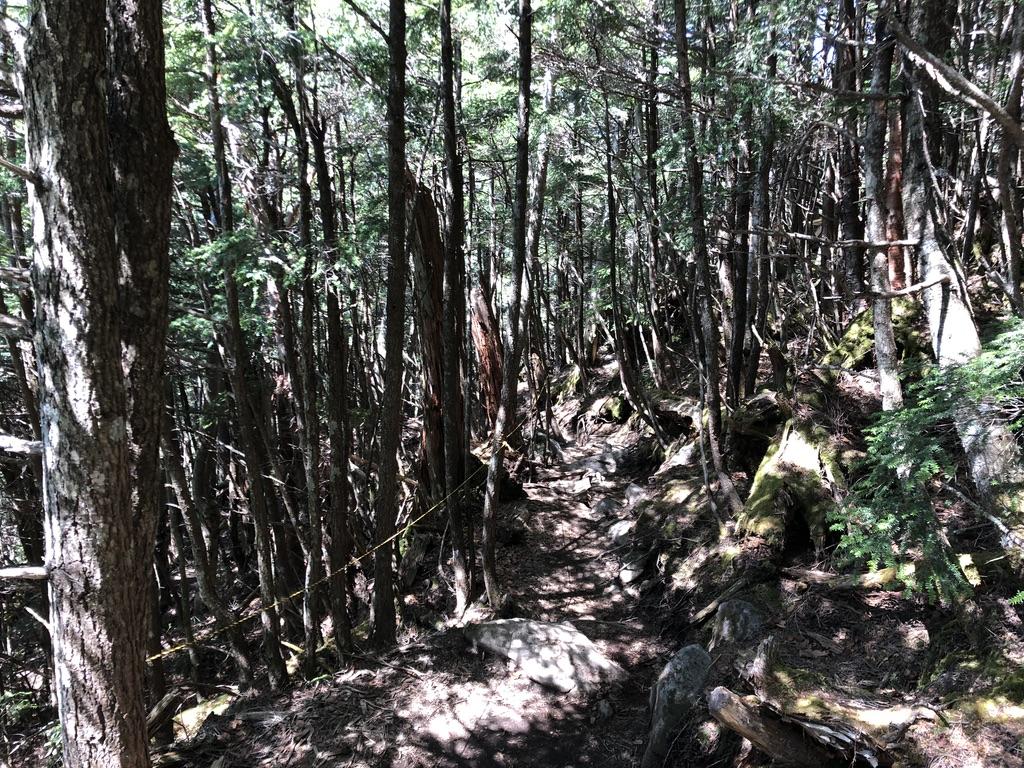 日光男体山・樹林帯