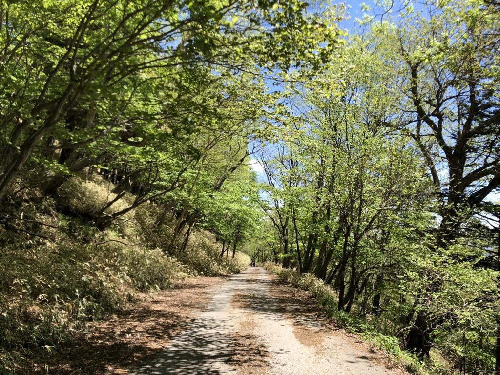 日光男体山・車道を歩いて帰りましょう