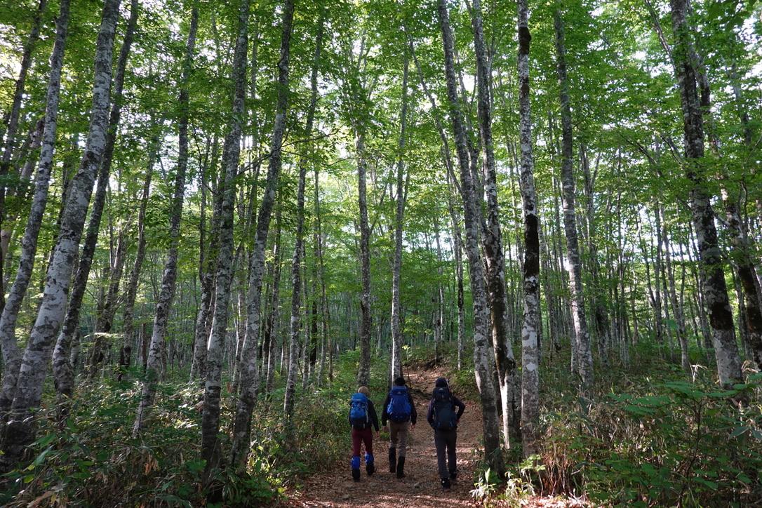 磐梯山・八方台登山口からの林道歩き