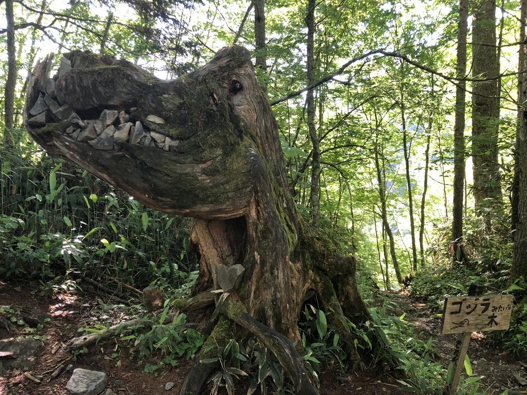 蝶ヶ岳・常念岳・ゴジラみたいな木