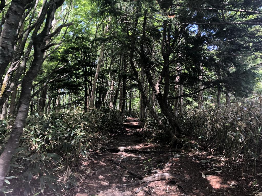 恵那山・広河原のコース、木々の間を進みましょう