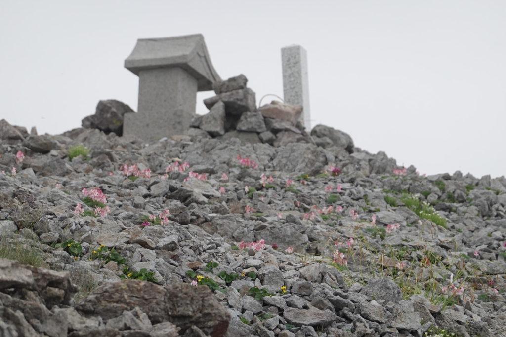 針ノ木岳・蓮華岳・蓮華岳の名を知らぬ花2