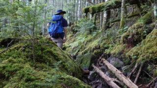 東天狗岳・西天狗岳・西尾根の樹林帯はまるでジブリの世界