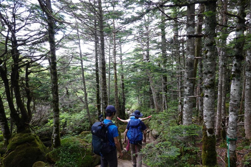東天狗岳・西天狗岳・黒百合ヒュッテから唐沢鉱泉へ湿度180%の樹林帯を下る