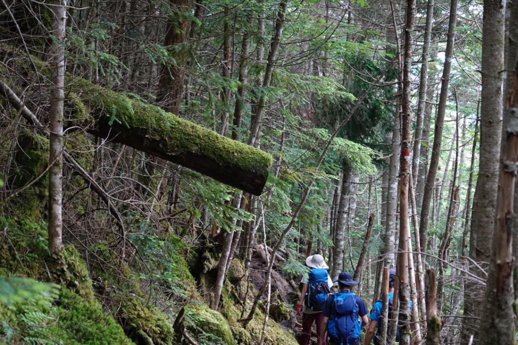 東天狗岳・西天狗岳・湿度180%の樹林帯を下る