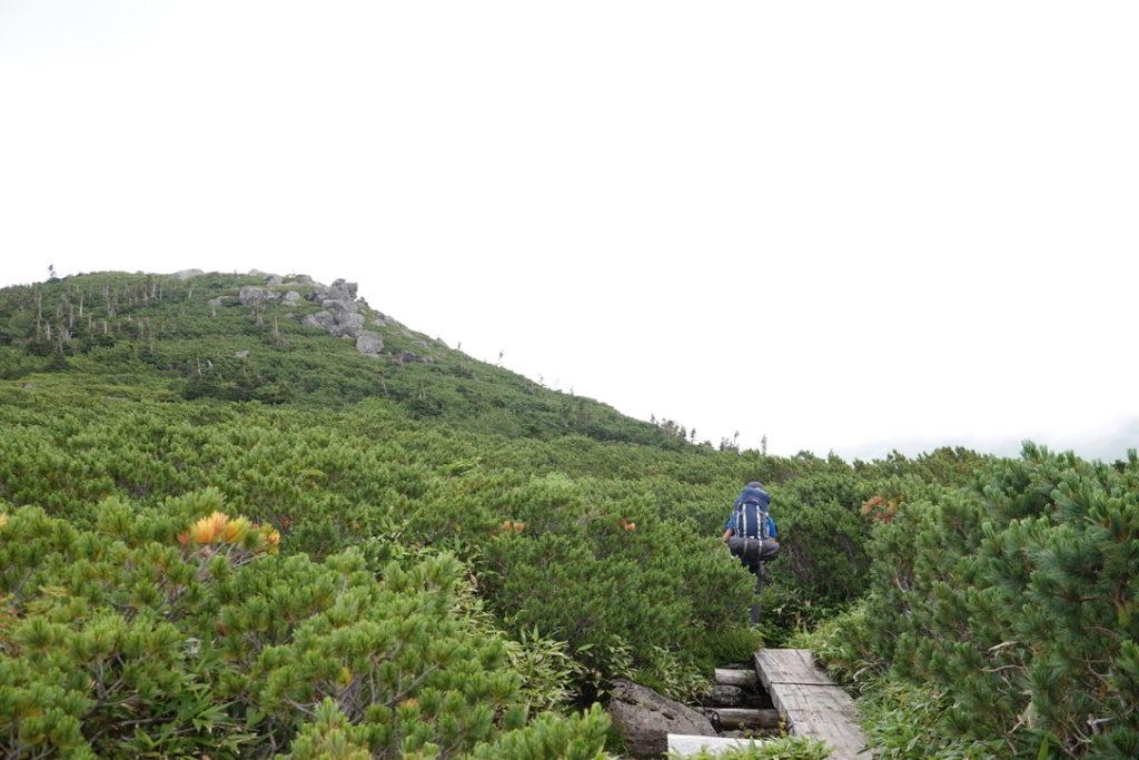 雲ノ平・奥日本庭園、ハイマツの中を進みましょう