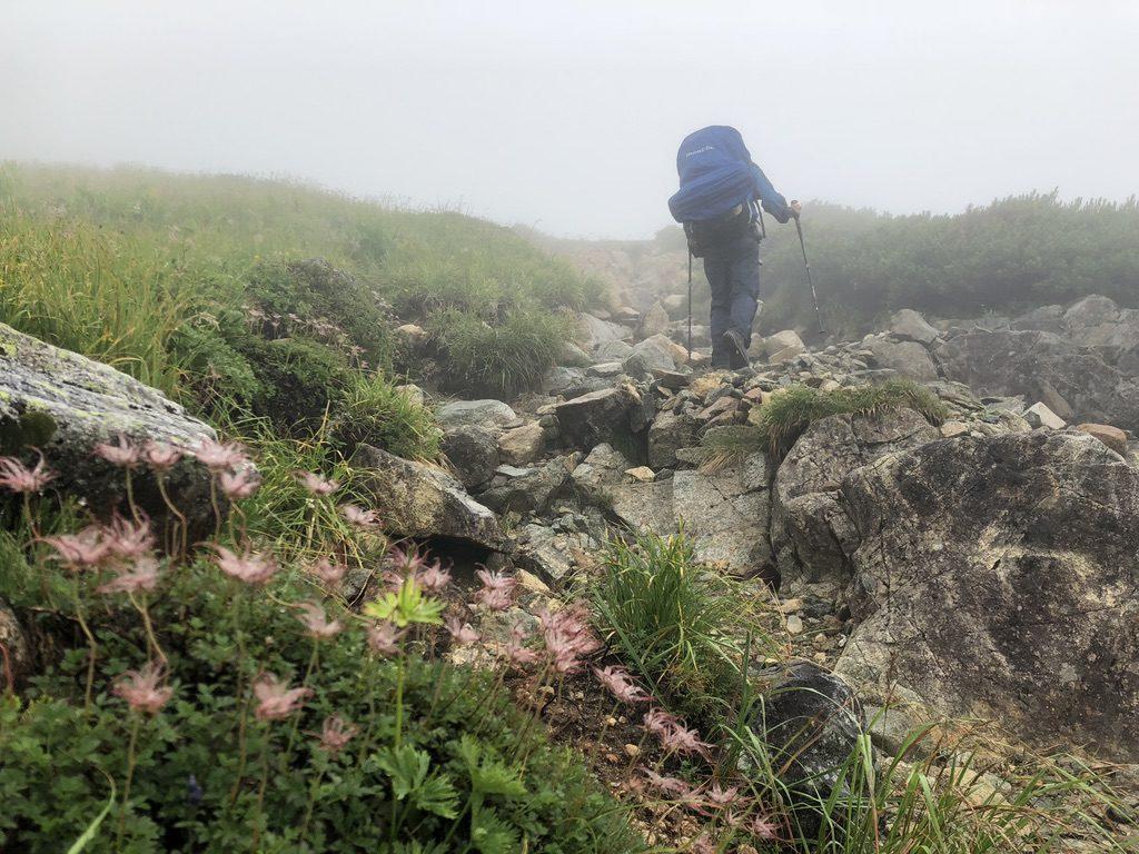 雲ノ平・三俣蓮華岳のチングルマ