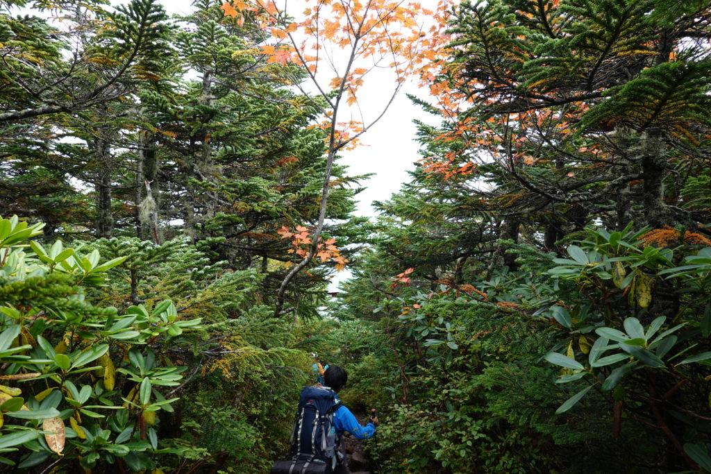 編笠山・権現岳・編笠山の紅葉がすこしだけはじまっていました
