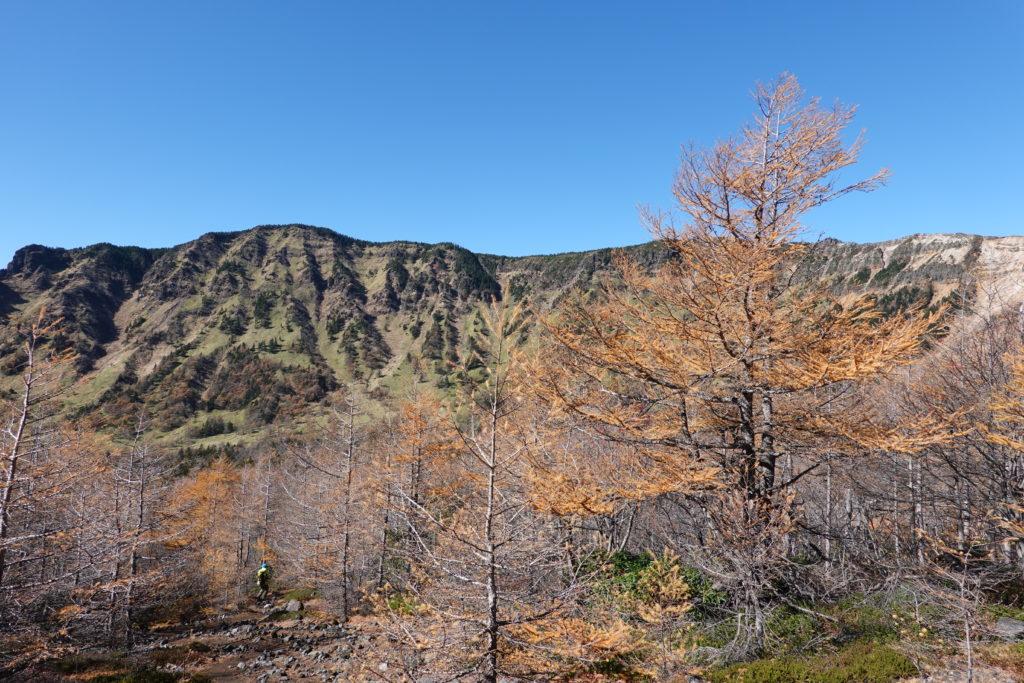 浅間山(前掛山)・前掛山ふもとのカラマツ林