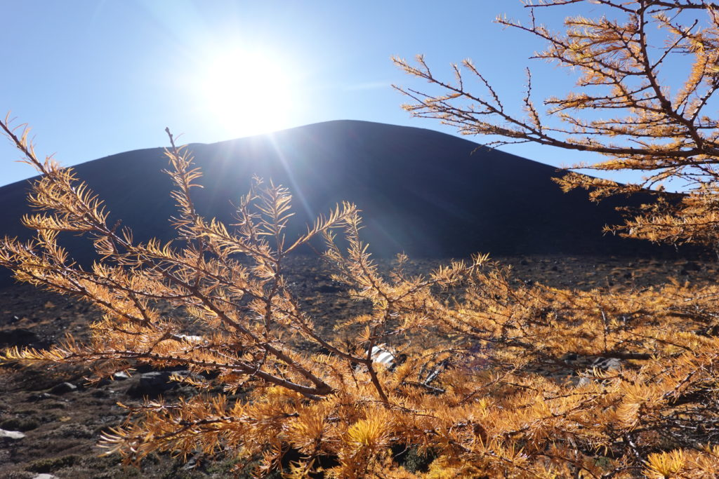 浅間山(前掛山)・黄葉のカラマツと浅間山(前掛山)