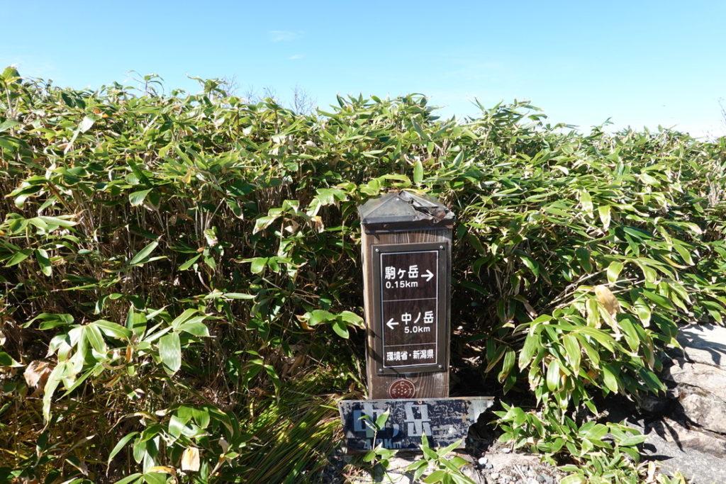 越後駒ヶ岳(魚沼駒ヶ岳)・中ノ岳と越後駒ヶ岳の分岐