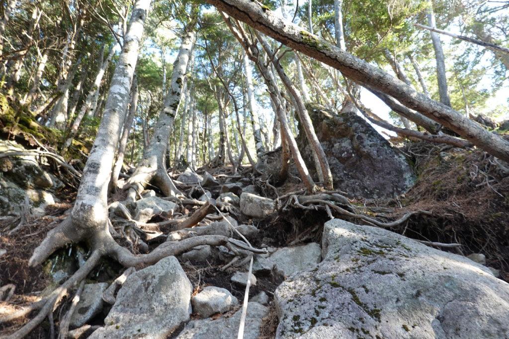 皇海山・どこまでいっても樹林帯・岩場