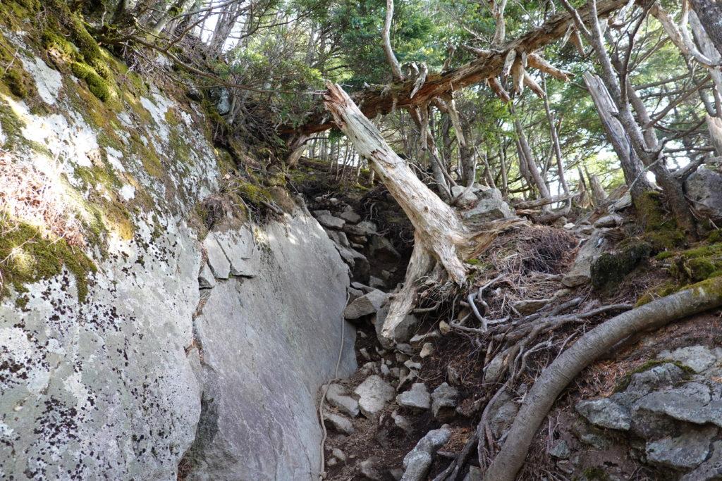 皇海山・どこまでいっても樹林帯・岩場2