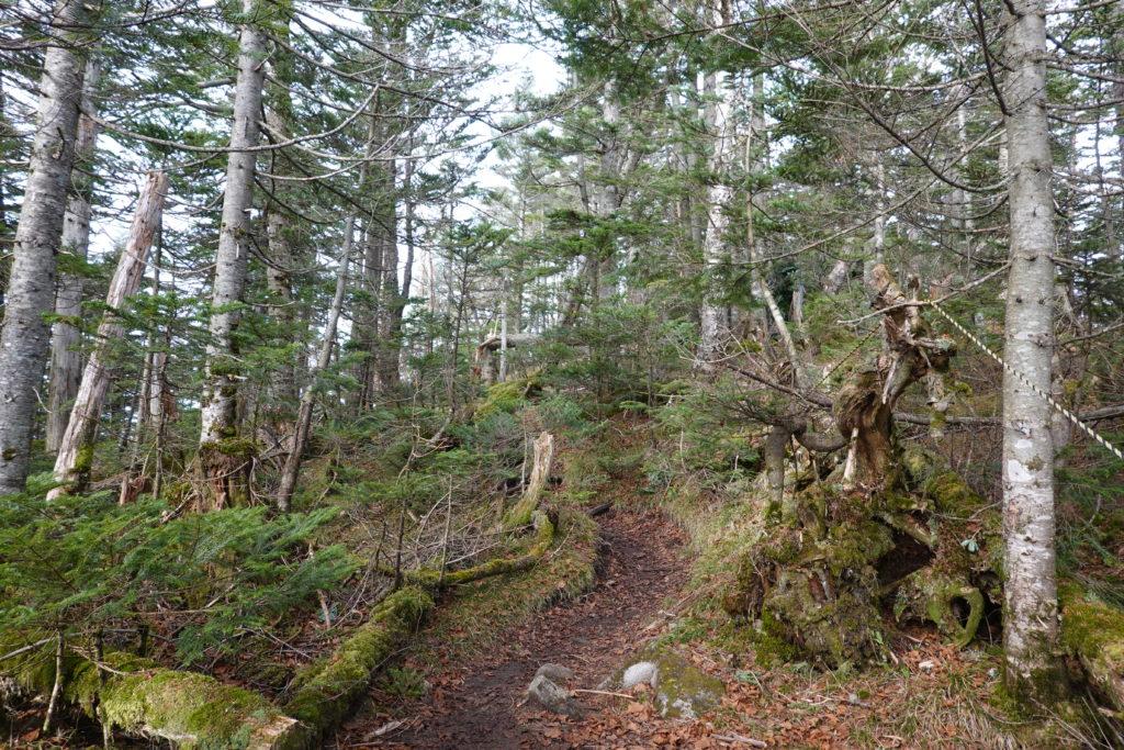 皇海山・岩場をこえても樹林帯